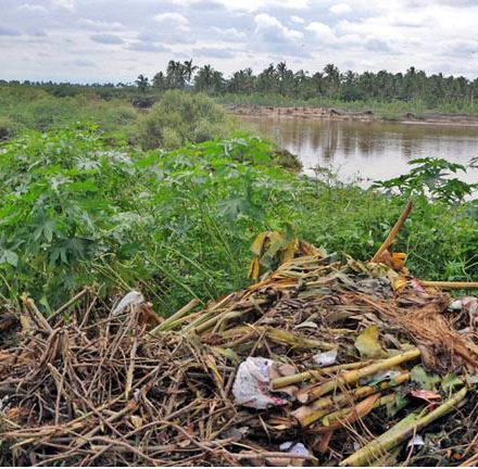 Mangroves pollution in Cuddalore